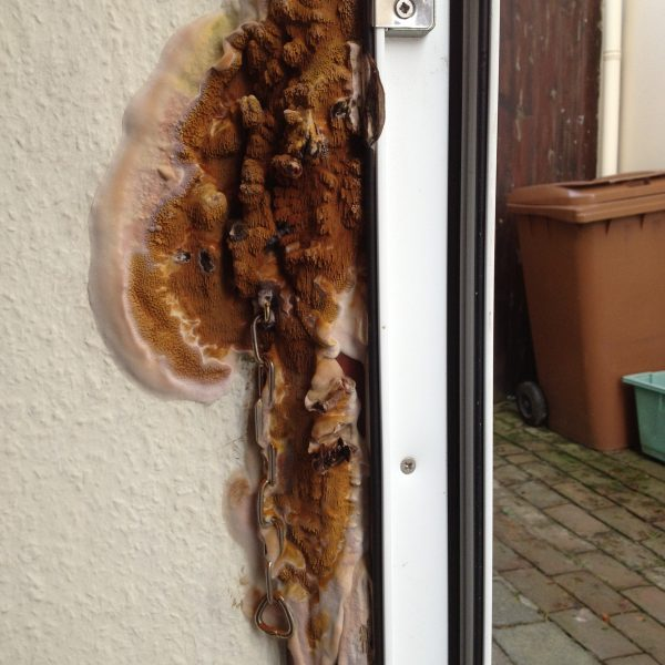 Home Box Dry Rot