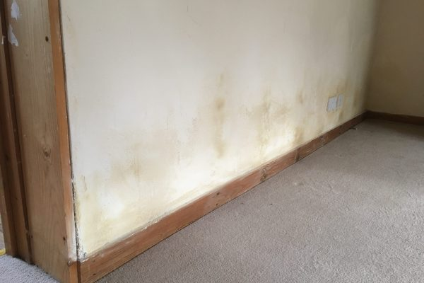 2020 Dampness affecting low level wall plaster